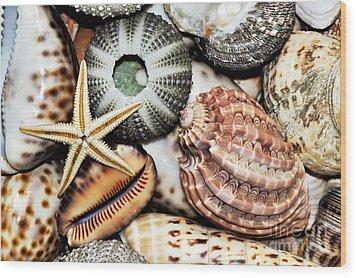 Shellscape Wood Print by Kaye Menner