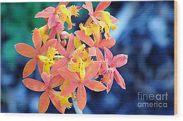 Wood Print featuring the photograph Sherbert Of The Sun by Joy Angeloff