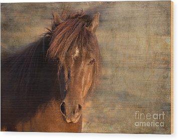 Shetland Pony At Sunset Wood Print