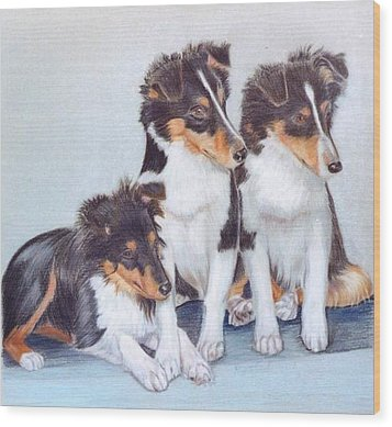 Shetland Sheepdog Puppies Wood Print
