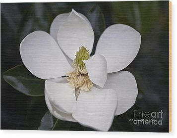 Wood Print featuring the photograph Shhhhh by Linda Blair