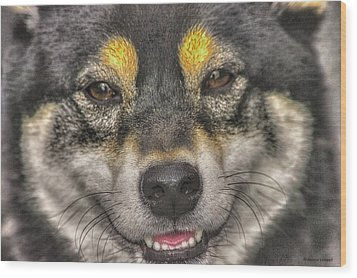Wood Print featuring the photograph Shiba Inu by Dennis Baswell