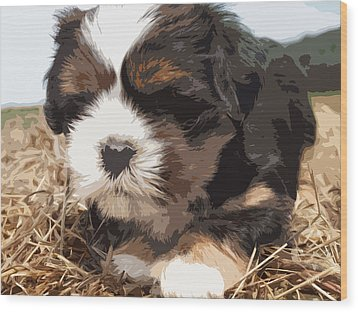 Shih Tzu On A String Wood Print by Robert Margetts
