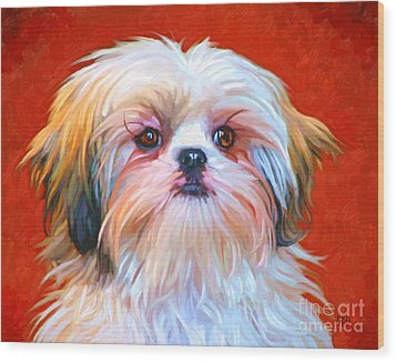 Shih Tzu Painting Wood Print by Iain McDonald