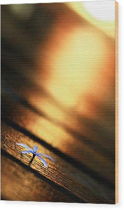 Shine On Me Wood Print by Suradej Chuephanich