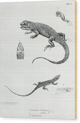 Shingled Iguana Wood Print by English School