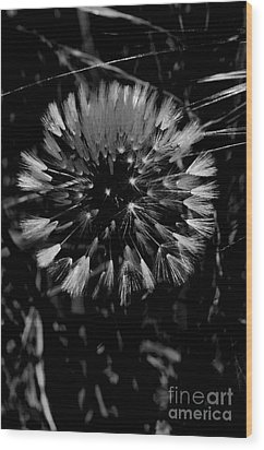 Wood Print featuring the photograph Shining by Simona Ghidini