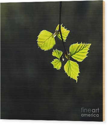 Wood Print featuring the photograph Shining Springtime by Kennerth and Birgitta Kullman