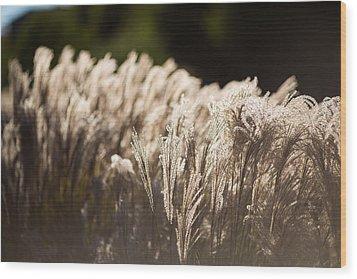 Shining Weeds Wood Print by Mike Lee