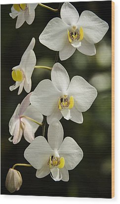 Shinning Orchids Wood Print by Penny Lisowski