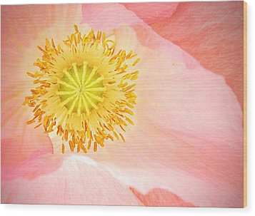 Shirley Poppy Center Wood Print by Chris Berry