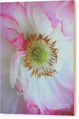 Shirley Poppy Wood Print by Shirley Sirois