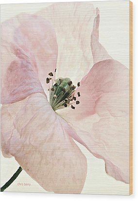 Shirley Watercolor Wood Print by Chris Berry