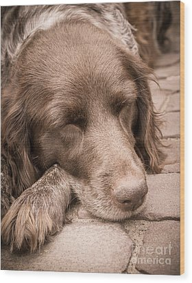 Shishka Dog Dreaming The Day Away Wood Print by Peta Thames