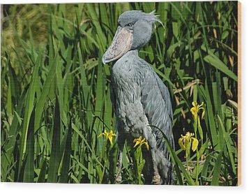 Shoebill Stork Wood Print by Georgia Mizuleva