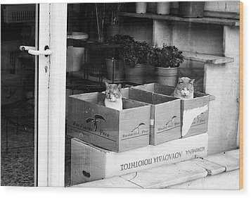 Wood Print featuring the photograph Shop Window Cats by Laura Melis
