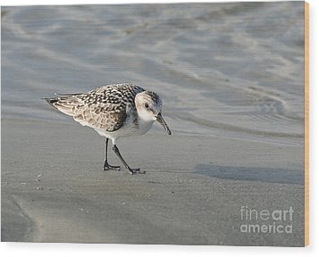Shore Bird On Ocean Beach Wood Print