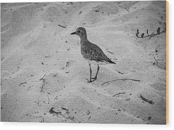 Wood Print featuring the photograph Shore Bird by Phil Abrams