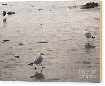 Shore Birds - 01 Wood Print by Gregory Dyer