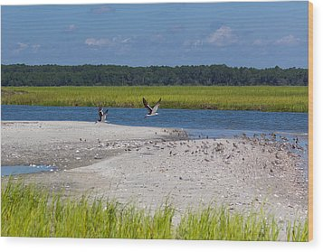 Shorebirds And Marsh Grass Wood Print by Patricia Schaefer