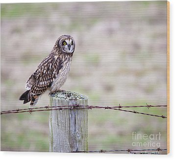 Short Eared Owl Boundary Bay Wood Print by Chris Dutton