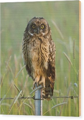 Short-eared Owl Wood Print by Doug Herr