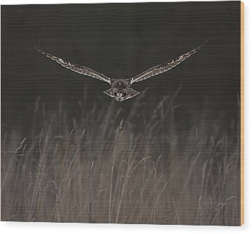 Wood Print featuring the photograph Short Eared Owl Focused by Paul Scoullar