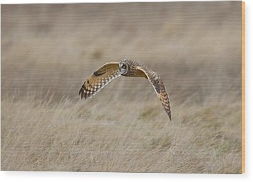 Short-eared Owl In Flight Wood Print by Kathy King