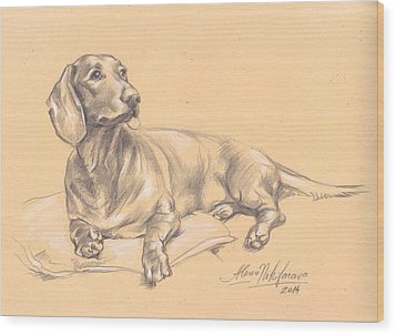 Short-haired Dachshund On A Pillow Wood Print