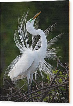 Showy Egret Wood Print