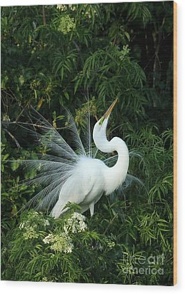Showy Great White Egret Wood Print by Sabrina L Ryan