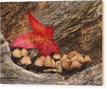 Shrooms Wood Print by Jacqui Collett
