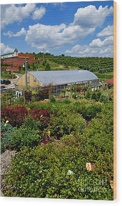 Shrubbery At A Greenhouse Wood Print by Amy Cicconi