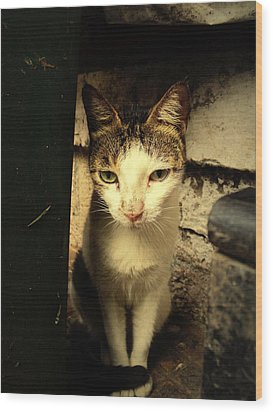 Shy Cat Wood Print