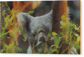 Shy Koala Wood Print by Dan Sproul