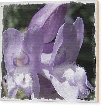 Shy Little Violets Wood Print