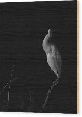 shy Wood Print by Mario Celzner