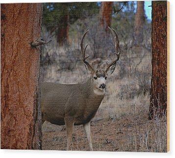 Shy Mule Deer Wood Print by Sherlyn Morefield Gregg