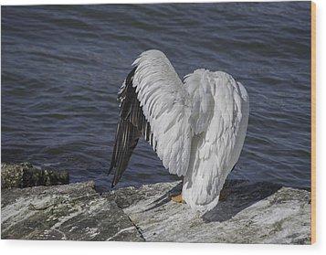 Shy Pelican Wood Print by Diego Re