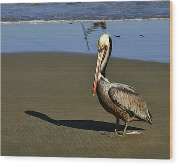 Wood Print featuring the digital art Shy Pelican by Gandz Photography