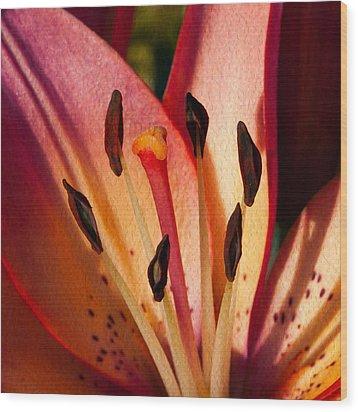 Shy Pink Lily Wood Print by Omaste Witkowski