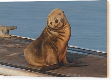 Wood Print featuring the photograph Shy Sea Lion Pup  by Christy Pooschke