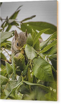 Wood Print featuring the photograph Shy Squirrel by Bradley Clay