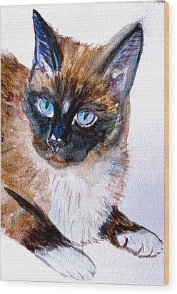 Siamese Cat Portrait Wood Print