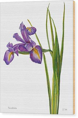 Siberian Iris - Iris Sibirica Wood Print