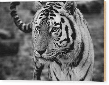 Siberian Tiger Monochrome Wood Print by Semmick Photo
