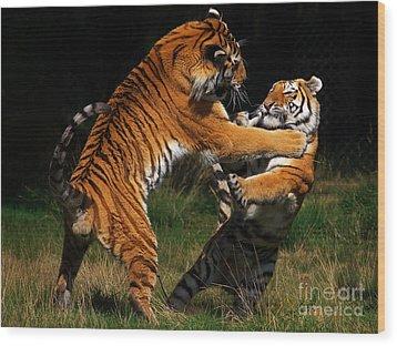 Wood Print featuring the photograph Siberian Tigers In Fight by Nick  Biemans