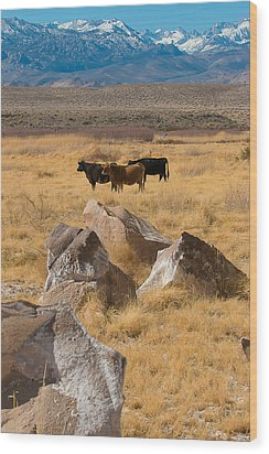 Sierra Cattle Wood Print by Jan Davies