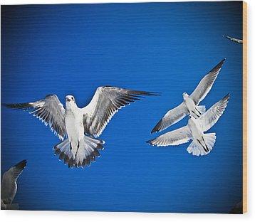 Siesta Key Sea Gulls Wood Print by Andrea Floyd