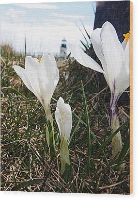 Sign Of Spring Wood Print